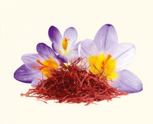 Cefak KG. Safranblüten mit Fäden